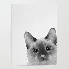 Siamese sneak-a-peek Poster