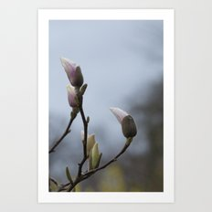 magnolia buds in spring Art Print