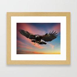 Harris Hawk in flight Framed Art Print