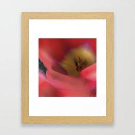 Tulips_217 Framed Art Print