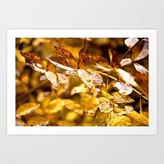 It Rained Gold Art Print