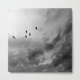 Panama Birds - bw Metal Print
