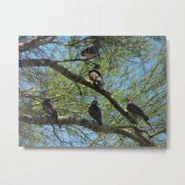Doves in a Palo Verde Tree, Tucson, Arizona Metal Print
