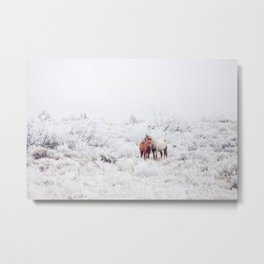 Two Winter Horses Metal Print