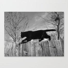 Black Cat Strut Canvas Print