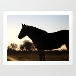 Backlit horse Art Print