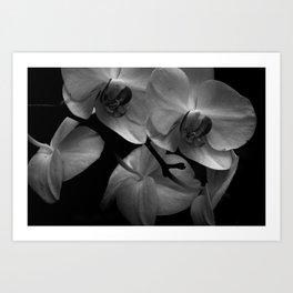 Orchidaceae Art Print