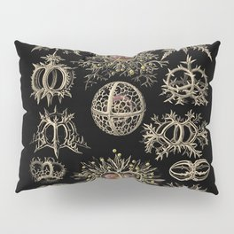 """Stephoidea"" from ""Art Forms of Nature"" by Ernst Haeckel Pillow Sham"