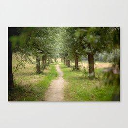 Willow Lane II Canvas Print