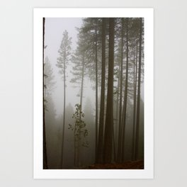 Into The Forest (Where Darkness Endures) Art Print