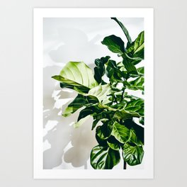Fiddle Fig Art Print
