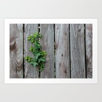 Plant starts to cover fence Art Print