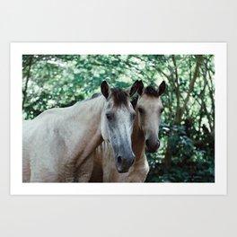 Horses at the Tide Pools Art Print
