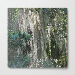 Moss covered tree Metal Print