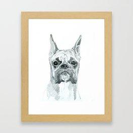 The Boxer Dog Miley Framed Art Print
