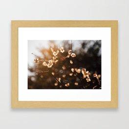 Japanese Plum Blossoms Framed Art Print