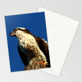 Osprey With His Dinner Leftovers Stationery Cards