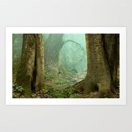 Enchanted misty forest Art Print