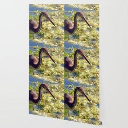 Tri-Color Heron Wallpaper