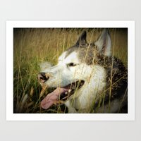 A little Husky... Art Print