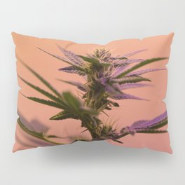 Macro cannabis kush photo Pillow Sham