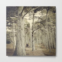 Pebble Cypress Metal Print