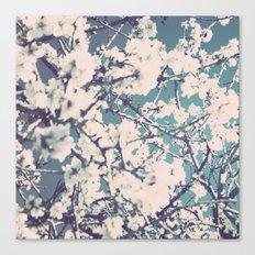 spring mediterranean almond flowers Canvas Print
