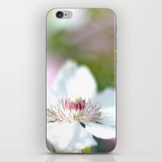 WHITE CLEMATIS iPhone & iPod Skin