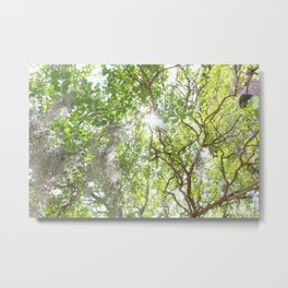 Charleston Moss Metal Print