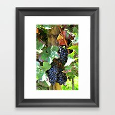 On the vine Framed Art Print