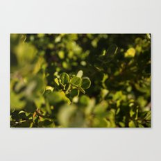 Green is the new black. Canvas Print