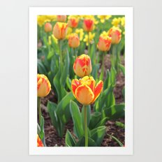 First Sign Of Spring Art Print