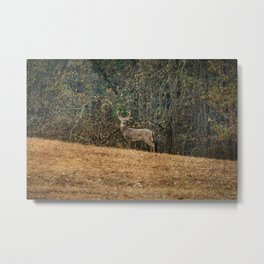 Buck At Pinson Mounds Metal Print