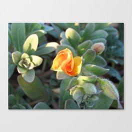 Beach Succulent Flower Canvas Print