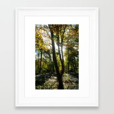 Glowing Woods. Framed Art Print