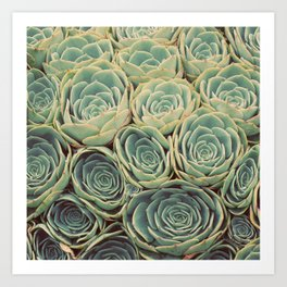Sea of Succulents Art Print