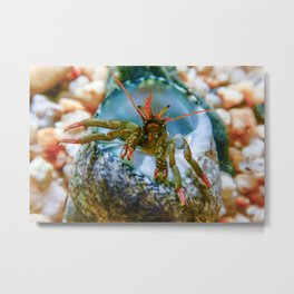 Small funny hermit crab underwater close up. Metal Print