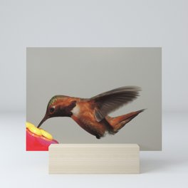 Rufous in for a Quick Lunch Mini Art Print