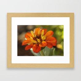 Marigold Flower Framed Art Print