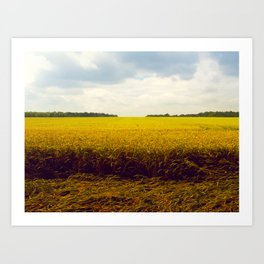 Prairie Landscape Bright Yellow Wheat Field Art Print