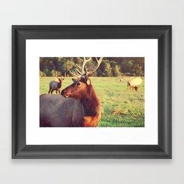 Summer Fields   05 Framed Art Print