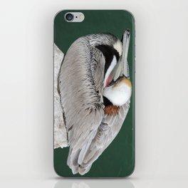 Brown Pelican near Avila Beach iPhone Skin