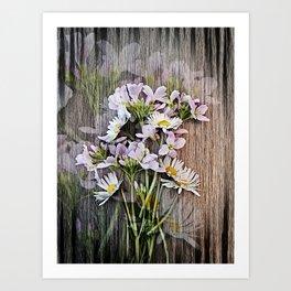 Cuckoo Daisies Art Print
