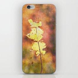 Seasonal Closeup - Autumn iPhone Skin