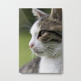 Katzen Portrait Metal Print