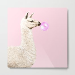 Playful Llama Chewing Bubble Gum in Pink Metal Print