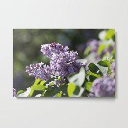 Lilacs 13 Metal Print