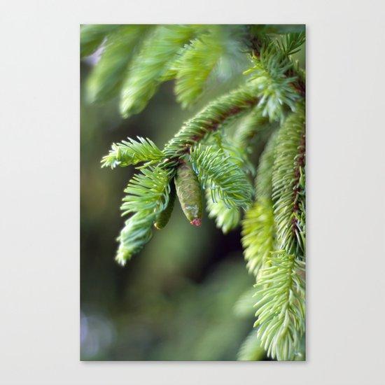 Baby Pine Cone Canvas Print