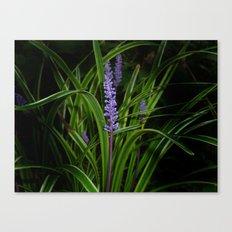 Wild flower... Canvas Print