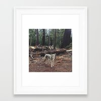 chinese Framed Art Prints featuring Injured Coyote by Kevin Russ